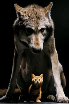 This is my bodyguard, Wolfy.  Don't make him angry.  You wouldn't like him when he's angry..  Wolf the Protector