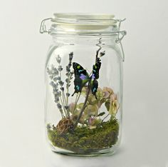 Gift for Her Butterfly Terrarium Kit in by TheAmateurNaturalist, $42.00