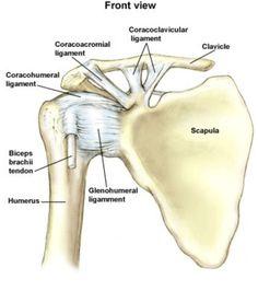 Anterior ligaments of the shoulder girdle