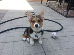 Can we play?