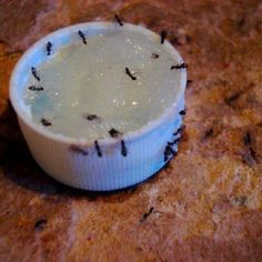 This is a miracle recipe for getting rid of those pesty ants that come every spring and summer. Mix up the solution, pack cotton balls in a jar cover, and put the solution on and they will be gone.