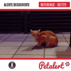 10.09.2016 / Chat / Angoulême / Charente / France