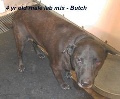 ***SUPER SUPER URGENT!!!*** - PLEASE SAVE BUTCH!! - EU DATE: 9/9/2014 -- Butch Dies Mon Please Save Him Breed:Terrier (mix breed) Age: Adult Gender: Male Size: Medium -  Call Silvia and Debbie now,,,,,Silvia is 910-876-0539 and Debbie is 339-832-0806. If Silvia's mailbox is full you can Text her. Transportation is generally available up and down the East Coast from NC, VA, MD, NJ, PA, NY and the North East
