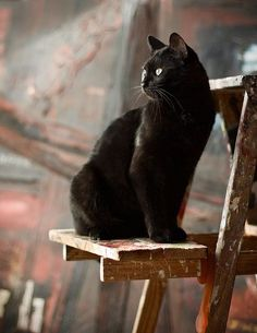 Cats are distant, discreet, impeccably clean and able to stay silent. What more could be needed to be good company? ~ Marie Lecinska