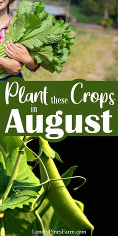 A large part of self sustainably is living off the land. In our mild PNW climate, that means working hard to garden year-round. When late summer hits, it's officially time to start planting your fall garden. Here are our top vegetables to plant in August & September for a bountiful fall harvest. Many of these plants are perfect for beginner gardeners. Gardening For Beginners, Gardening Tips, Growing Spinach, Growing Tomatoes, Organic Gardening, Vegetable Gardening, Veggie Gardens, Succession Planting, Companion Planting