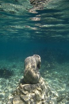 Jason Decaires Taylor, Underwater Sculpture, Nature Aesthetic, Underwater Photography, Underwater Photos, Film Photography, Street Photography, Landscape Photography, Nature Photography