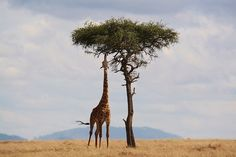 Frequently Asked Questions About Growing Taller