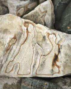 Kivihahmoja