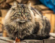 My cat - Mon chat qui surveille les environs.