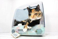 Spullen die je niet meer gebruikt, kan je natuurlijk bij het grofvuil zetten. Maar je kunt er ook iets anders mee doen! Wat dacht je van deze slimme kattenmand? #besparen #kattenmand #kattenbak #kat #Bewuzt