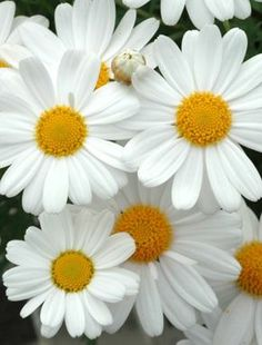 .daises!! my favorite because they look so cheerful all the time. Means: day's eye...can u tell why??? (: