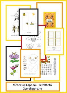 Méhecske lapbook-letölthető Interactive Notebooks, Diagram, Bullet Journal, Interactive Science Notebooks