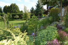 Ogród bacowej - strona 2 - Forum ogrodnicze - Ogrodowisko