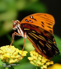 This is really neat how they combine animals with insects. Some of them are creepy...