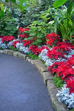 Lovely Flower Border