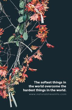 The softest things in the world overcome the hardest things in the world.    #stress #stressed #anxiety #relax #relaxed #meditate #meditation #sleep #sleepproblem #calm #calmmind #healthybody #healthymind #serenity #immunesystem #healthyimmunesystem #energy #energize #boostenergy  #TheStressCompany #NaturalStressInfo #inspirationalquotes