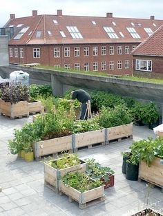 Rooftop garden is the best way to get your home more green.