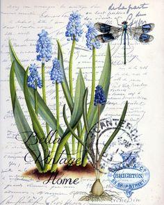 Imprimolandia: Láminas de botánica vintage                                                                                                                                                      Más