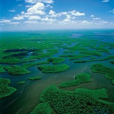 Everglades, Florida by noei