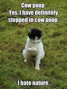 Image result for secret cow meeting meme