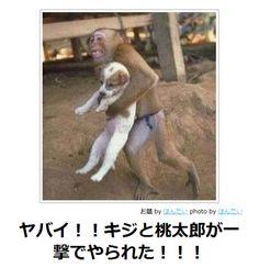 """ekyu: ボケて(bokete): 【ボケ】ヤバイ!!キジと桃太郎が一撃でやられた!!! """