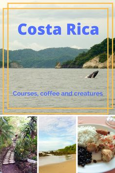Courses, Coffee and Creatures in Costa Rica