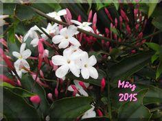 März 2015