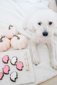 DIY Halloween Dog Treats In Less Than An Hour Diy Dog Treats, Dog Halloween, Dogs, Pet Dogs, Doggies