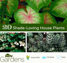 I found these gorgeous plants using the honestly helpful Plant Finder on HGTVGardens, sponsor of this post.