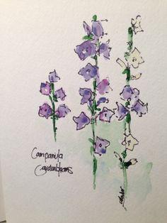 Campanula Watercolor Card
