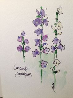 Campanula Watercolor Card