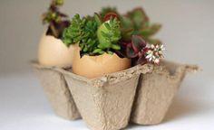 Reutilize a casca de ovo de forma original