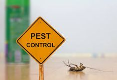 Best Pest Control in Sydney quickly eliminates active infestations of most common pests - cockroaches, ants, rats, fleas and mice. Call us Now 0414191 Best Pest Control, Pest Control Services, Bug Control, Types Of Bugs, Types Of Insects, Termite Control, Bees And Wasps, Natural Home Remedies