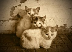 """""""Once upon a time, there were 3 kittens and their names were Mittens, Tom Kitten and Moppet.  They each had dear little fur coats of their own and tumbled by the door step and played in the dust."""" --Beatrix Potter (""""The Tale of Tom Kitten"""")"""