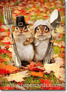 Chipmunk Couple (1 card/1 envelope) Avanti Funny Thanksgiving Card  INSIDE: From our colony to yours … Happy Thanksgiving!