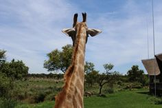 Travels for Johannesburg Tourists Make Up Tricks, Giraffes, Fashion Advice, Lifestyle Blog, Safari, Lion, Adventure, Park, Travel