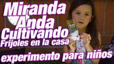 Experimento para niños / Miranda Anda sembrando un Frijol