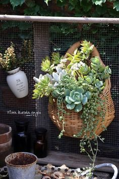 After learning about poly-foil, I'm thinking lining wicker baskets with it then planting. Have to be as a closed container. Growing Succulents, Succulents In Containers, Cacti And Succulents, Container Plants, Planting Succulents, Container Gardening, Planting Flowers, Succulent Landscaping, Succulent Gardening
