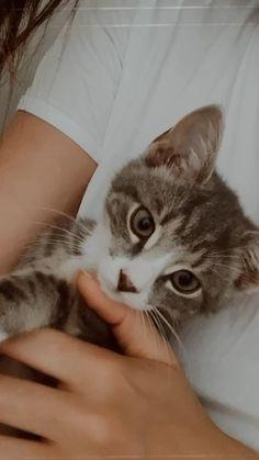 Cute Baby Cats, Cute Kitten Gif, Cute Baby Animals, Kittens Cutest, Cats And Kittens, Funny Animals, Cute Babies, Funny Cats, Cute Boyfriend Pictures
