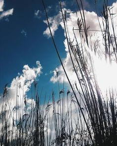 #vscogrid #vscofilter #vsco #vscocam #vscomania #vscoaward #vscophile #vscoedit #vscolovers #vscodaily #bestoftheday #vscoonly #vscogood #vscovibe #vscoartist #vscopic #getoutside #livefolk #natureporn #natureaddict #liveauthentic #liveadventurously #explore #exploreeverything #folkmagazines #justgoshoot #hiking #nature #wood #wild by eleenye