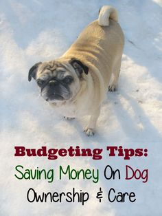 Budgeting tips for saving money on dog ownership and care. Owning a dog is more expensive than you may realize!