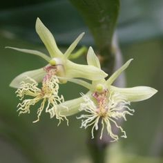 orchid species - Google Search
