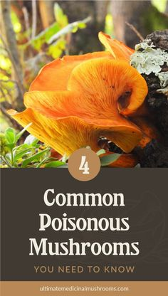Before you begin hunting for mushrooms, it is important to be knowledgable of common poisous mushrooms. This free guide will tell you how to identify these poisous mushrooms in order to avoid their dangers. | Discover more about medicinal mushrooms at ulitmatemedicinalmushrooms.com #foragingmushrooms #ediblemushrooms #poisonousmushrooms #wildmushrooms Poisonous Mushrooms, Edible Mushrooms, Growing Mushrooms, Poisonous Plants, Wild Mushrooms, Stuffed Mushrooms, Puffball Mushroom, Mushroom Guide, Mushroom Hunting