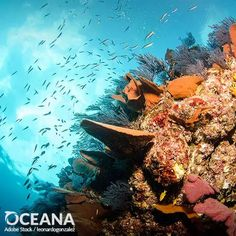 Your name can protect ocean life from devastation