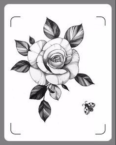 Mini Tattoos, Rose Tattoos, Flower Tattoos, Rosen Tattoo Frau, Rose Sketch, Floral Drawing, Oldschool, Tattoo Stencils, Flower Tattoo Designs
