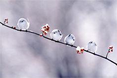 Little snow birds. BFFS.