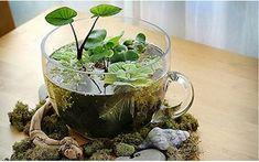 Ideas para el hogar: Decora con plantas acuáticas