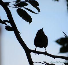 Vogelfrei - wo sind die kleinen Schreihälse jetzt?