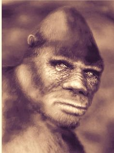 BigFoot Sightings from Around the Worls, Sasquatch, Yowi, Abonimable Snowman, All Sightings of Large Humanlike Creatures Bigfoot Photos, Finding Bigfoot, Bigfoot Sightings, Bigfoot Sasquatch, Legends And Myths, Mothman, Animal Species, Cher, Werewolf