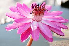 En güzel dekorasyon paylaşımları için Kadinika.com #kadinika #dekorasyon #decoration #woman #women Lotus flower